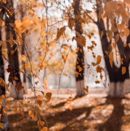 autunno